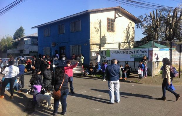 Municipio de Temuco esterelizó a más de mil perros