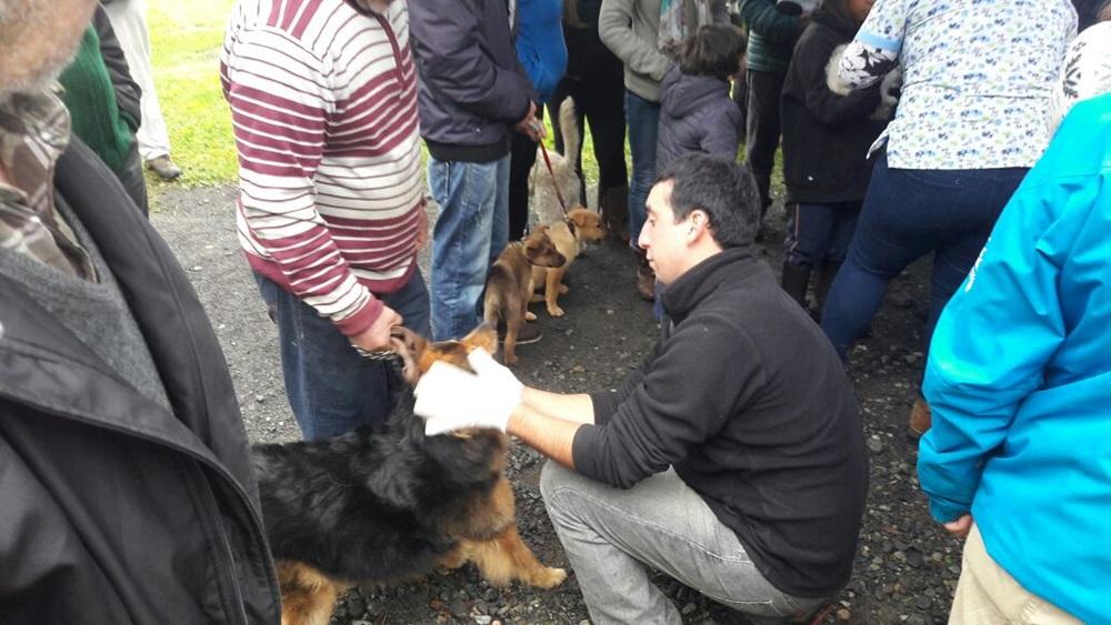 Pucón lidera a nivel regional en programa de Tenencia Responsable de Mascotas