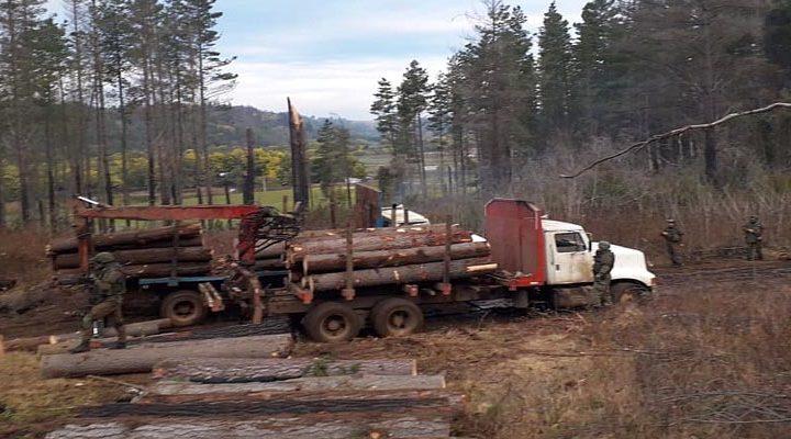 Equipo táctico de Carabineros incautó camiones y detuvo a dos sujetos por robo de madera en Collipulli