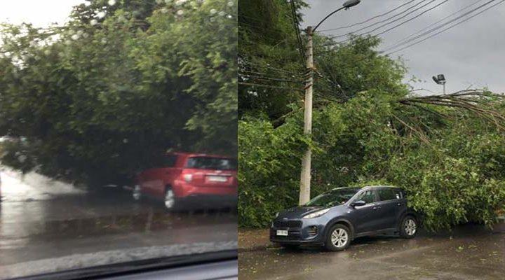 [Fotos] Parte de un árbol cayó esta mañana a metros de un colegio