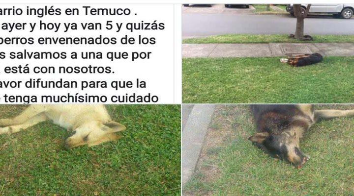 Envenenamiento de perros preocupa a vecinos en Temuco