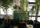 180 dosis de cannabis sativa y plantas de la misma droga fueron decomisadas en Vilcún