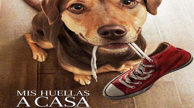 """No te pierdas el estreno de esta semana en Cine Hoyts """"Mis Huellas a Casa"""""""