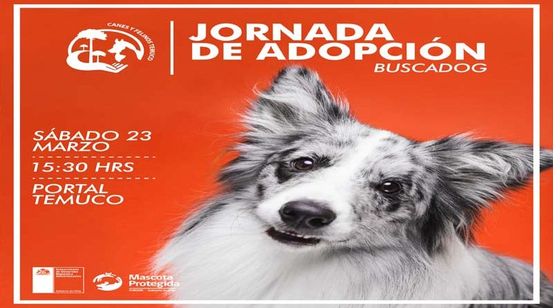 Este sábado re-lanzamiento jornadas Buscadog en Portal Temuco