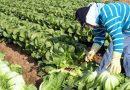 Seremi de Agricultura busca apoyo de instituciones públicas y privadas para fomentar el desarrollo del rubro hortícola regional