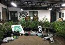 32 plantas de marihuana fueron decomisadas desde una vivienda en Collipulli